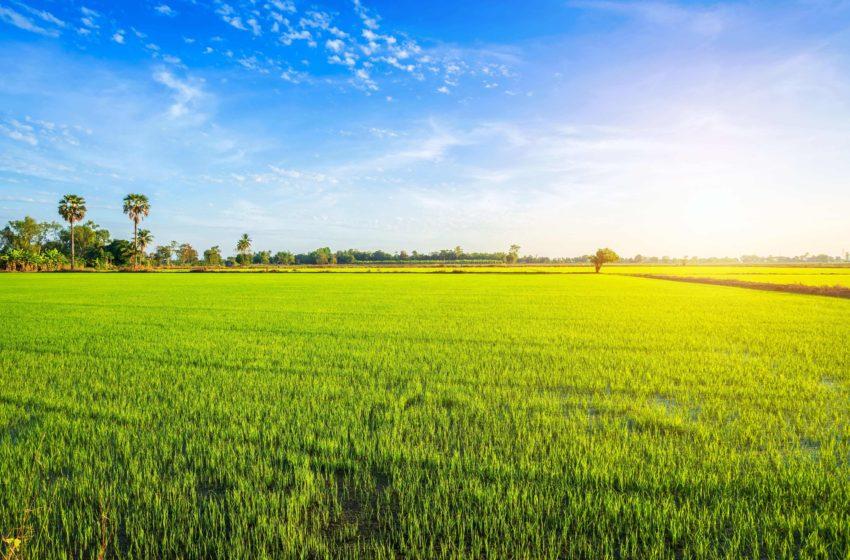 Bani de la stat pentru fermierii afectati de seceta