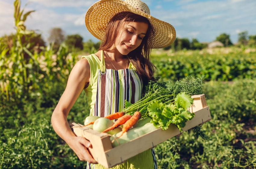 Fermierii care angajeaza tineri someri pot primi intre 2.250 si 6.000 RON lunar