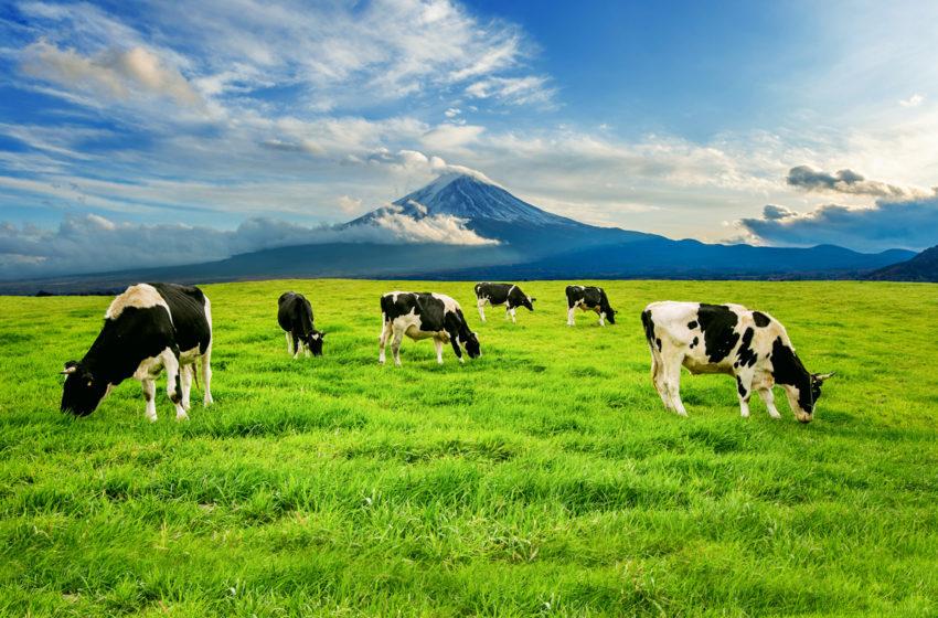 APIA a inceput eliberarea adeverintelor pentru fermieri