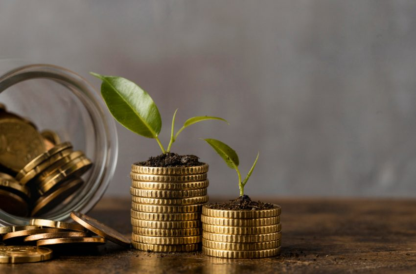 Fonduri de peste 1,2 milioane de euro pentru producatorii de plante aromatice