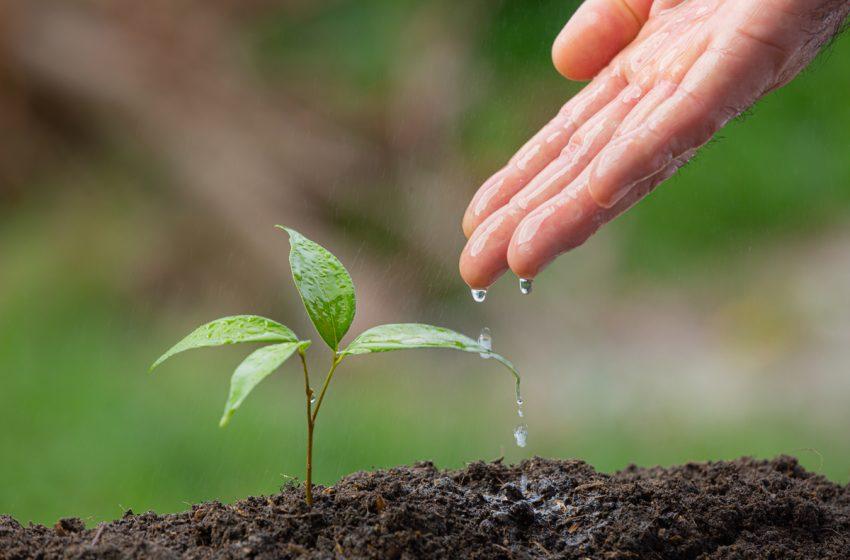 Campanie de ecologizare in Gorj