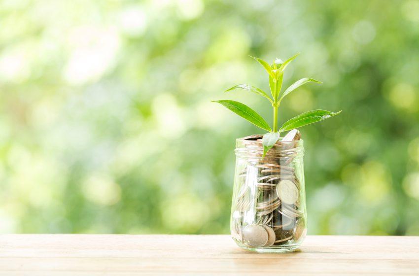 Finantari de 300.000 de euro pentru startup-uri eco